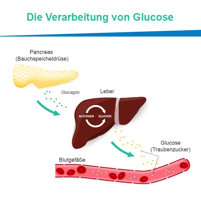 Antidiabetikum Metformin